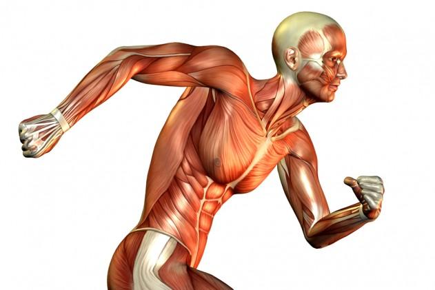 RaceTime Muscle Fibers